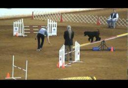 Kasha Crushes the 2011 Agility National Championships