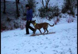 Eliska Teaches 2on 2off Dog Agility Contacts Pt 1