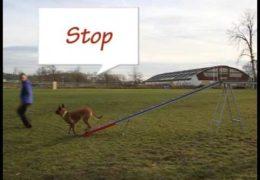 Eliska Teaches 2on 2off Dog Agility Contacts Pt 2