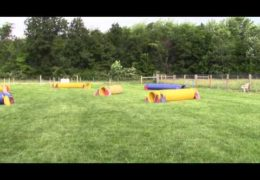 Dog Agility Tandem Tunnelers is a Challenge