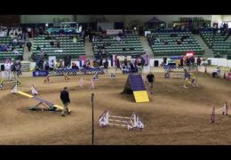 Tuck Running Great at 2018 AKC National Agility Championship