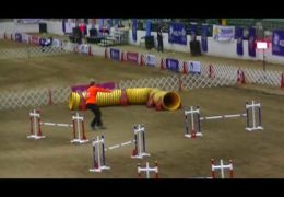 Raven Aces This 2018 AKC National Agility Championship Course