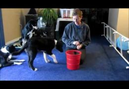 Great Dog Agility Beginner Distance Work