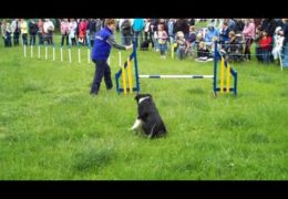 A Tad Too Much Fun With Dog Agility Relay