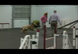 Beautiful Briard's Amazing Dog Agility Run