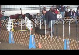 Briards Loving Dog Agility Excellent B JWW