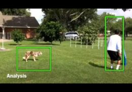 Novice Dog Agility JWW Analysed