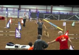 Lucky's Superb AKC Dog Agility Debut