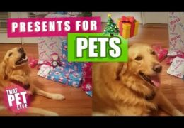Dogs Opening Presents