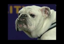 Dog Agility Compilation