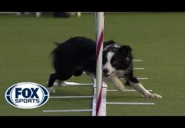 Best of 2020 Westminster Agility