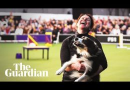 Inside the World of Dog Agility