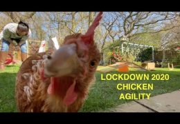 Lockdown Agility