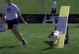 Medium Dog Agility Competition