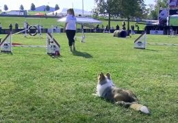 Small Dog Agility Competition
