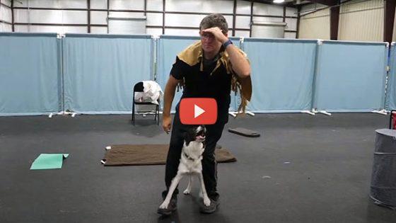 AKC Trick Dog