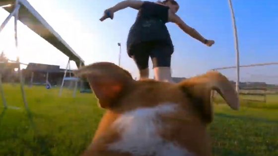 Agility Dog's View