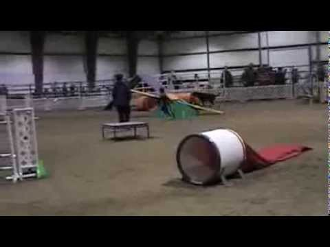 This 6 Year Old Junior Dog Agility Handler is Pure Talent