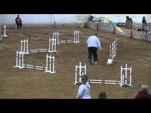 A Bad Case of the Zoomies Takes Another Dog Agility Team