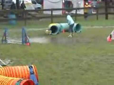 Pomeranian Votes for a New Dog Agility Obstacle, Puddle Jumping