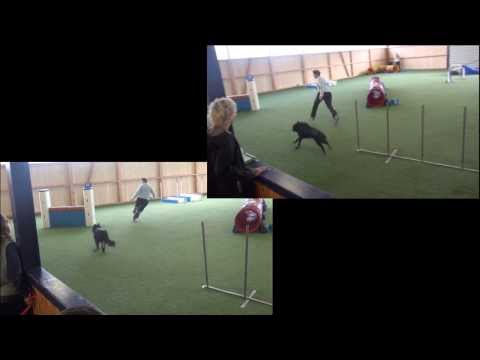 Side by Side Dog Agility Video of Amazing Groenendaels
