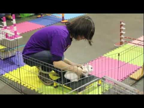 Did You Know the Easter Bunny Does Agility?