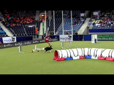The Lighter Side of Dog Agility World Championships