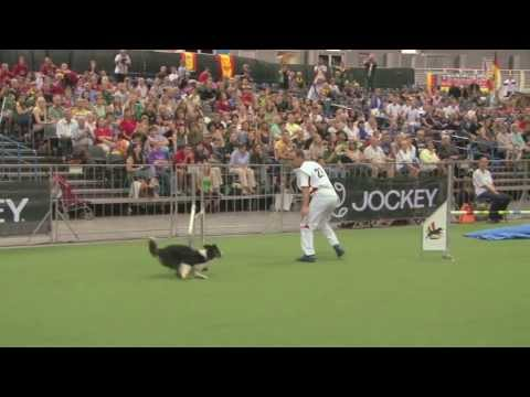 Lane Crushes the Individual Large at The 2013 FCI Dog Agility WC