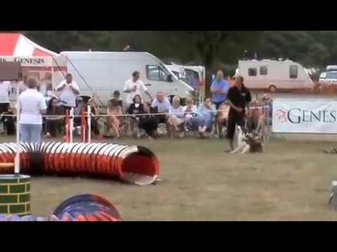 Dave & Dobby Crushing These Dog Agility Courses