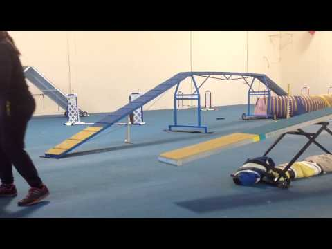 What is Drop Zone Teeter Training in Dog Agility