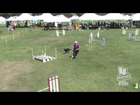 This Dog Agility Steeplechase is Super Smooth and Fast