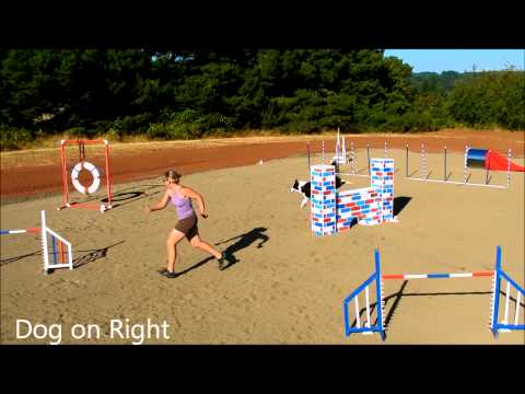 Visual Definition of The Dog Agility Blind Cross