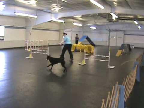 Qwik Is Quick At Her First UKC Dog Agility Trial