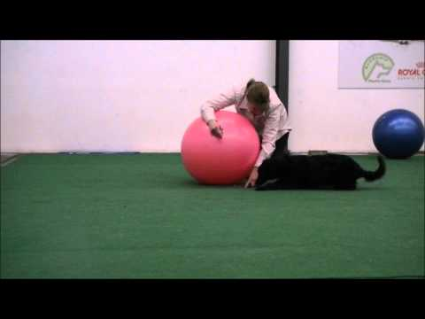 Teaching the Push for Treibball