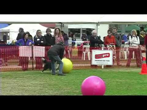 Treibball is Spreading Around the World