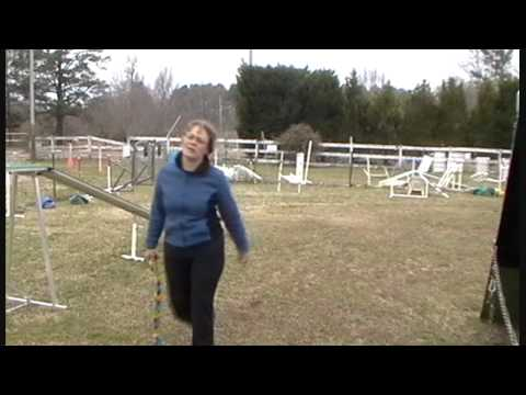 Some Great Angled Approaches For Dog Agility