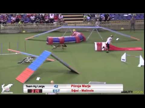 Marje Piiroja's Brilliant 2014 FCI Large Agility Run