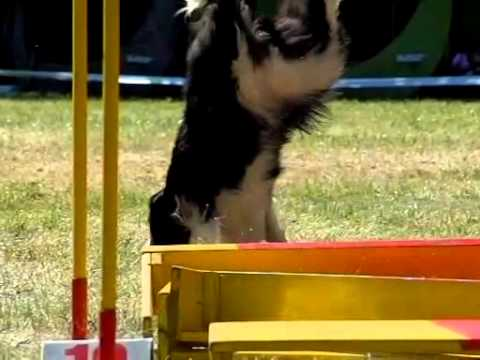 What is Better Than Watching Dog Agility? Watching in Slow Motion