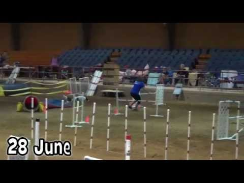 The Benefits of Dog Agility are Endless