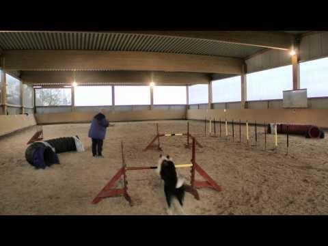 Beautiful Dog Agility Handling With Tandem and Jaakko Turns