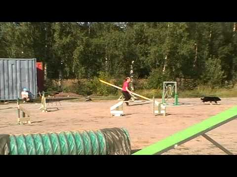This Dog Agility Team Lights Up This Course