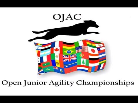 Incredible Video of The 2013 Open Junior Agility Championships