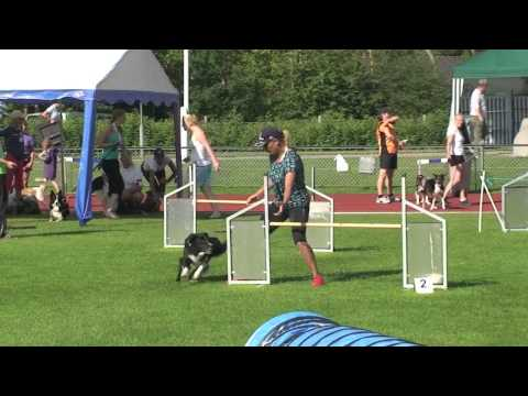 Wow Talk About Tight Turns in Dog Agility