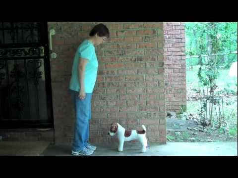 Teaching Your Dog to Back Without Body Pressure