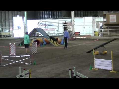 Raven's First Competition Agility Run is Gorgeous