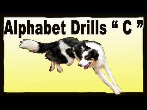 Fun Drills To Improve Your Dog Agility Handling