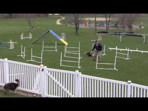 A Challenging Dog Agility Front Cross Drill