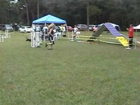 Front and Rear Cross Used on Same Dog Agility Course