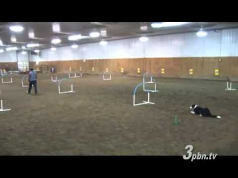 This is Dog Agility Wow Factor Times Ten