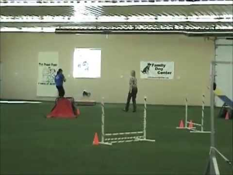 Kaiser Will Make You Smile With His Dog Agility Style